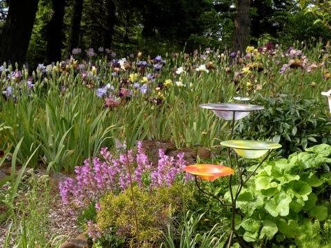 quail an artist 39 s garden. Black Bedroom Furniture Sets. Home Design Ideas