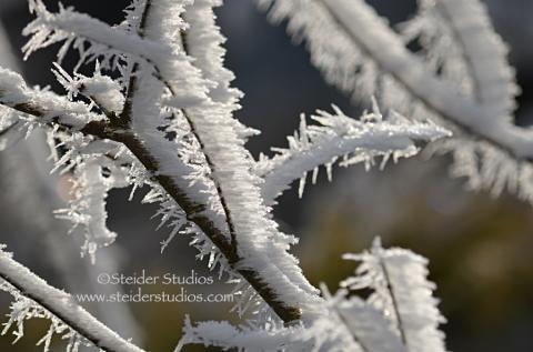 Steider Studios:  Winter Hoarfrost 4