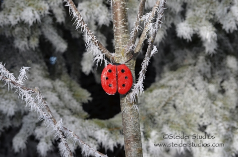 Steider Studios:  Winter Ladybug