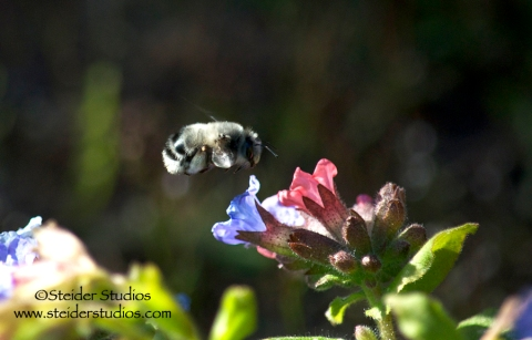 Steider Studios:  Bumble in flight
