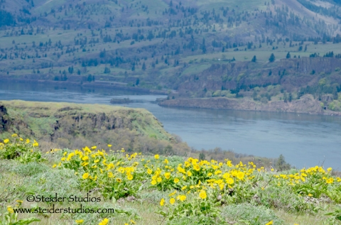 Steider Studios.Field of Wildflowers above Columbia River
