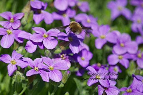 Steider Studios:   Bee in Flight
