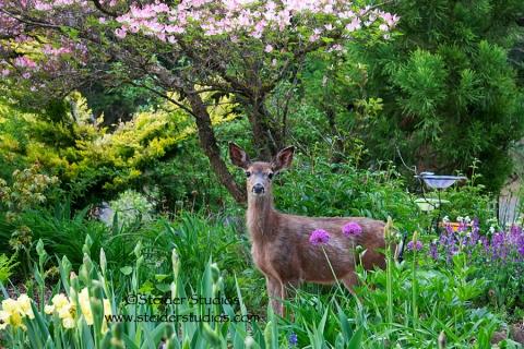 Steider Studios - Spotless Bambi in Garden